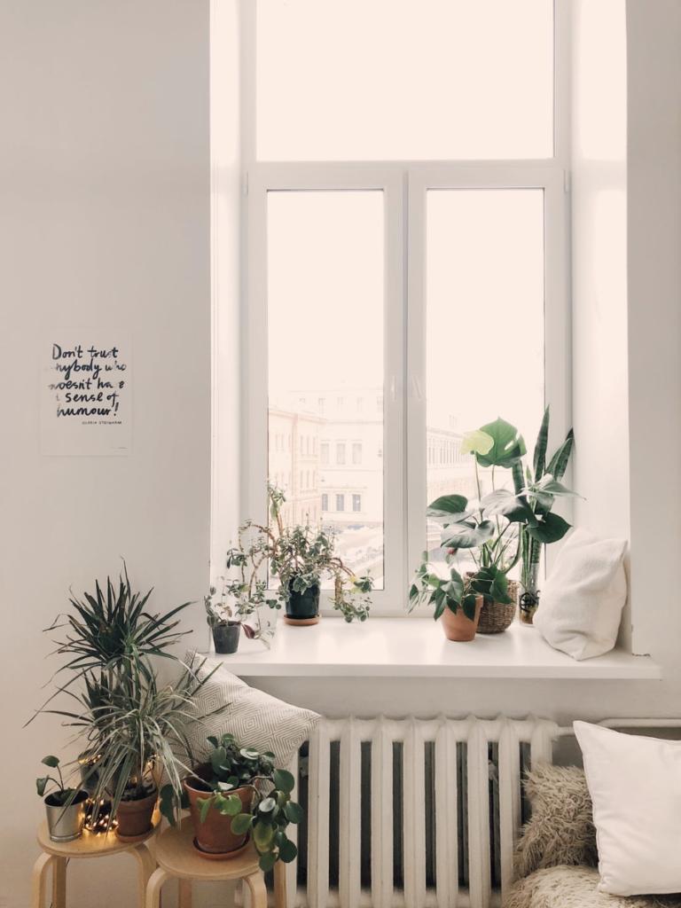 Las 5 mejores plantas para el interior de tu hogar