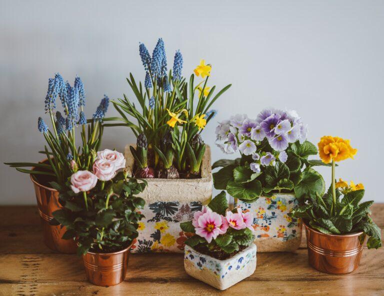 Recibe la primavera con estas flores para tu espacio